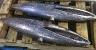 Custom-Poured Lead Ballast